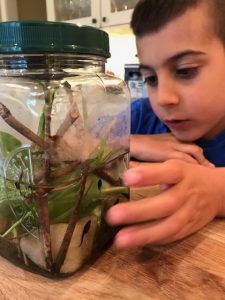 Kindergarten - study of animals and life cycles in science